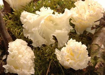 Les fleurs de Tête de Moine de la Crèmerie Royale